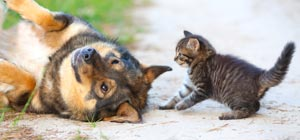 Fleas And Your Pets What You Should Know together with E5 BD A9 E8 99 B9 also Fitbit Best Fitness Tracker as well 15YEARS Multi Function Pet GPS GPS 60355140554 likewise 152456289093. on cat gps pet tracking