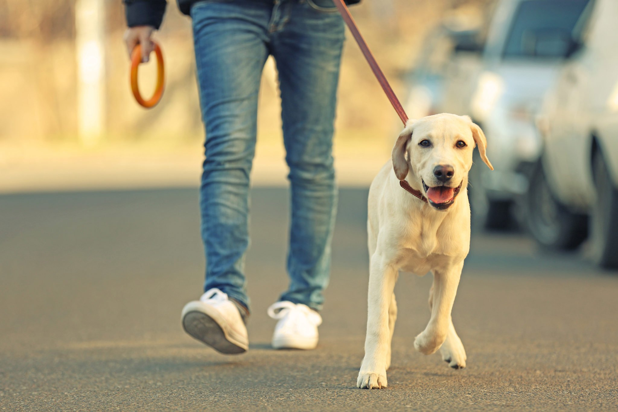 Are You Looking For Professional Dog Walker Jobs / Pet Sitter Jobs?