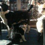 Hoboken-Dog-Walker