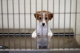 Cage Free Dog Boarding NJ, Hoboken pet sitting, Hoboken Dog Walker, trusty tails, Dog Walking Jersey City, Dog Walker Jersey City, dog Walker NJ,