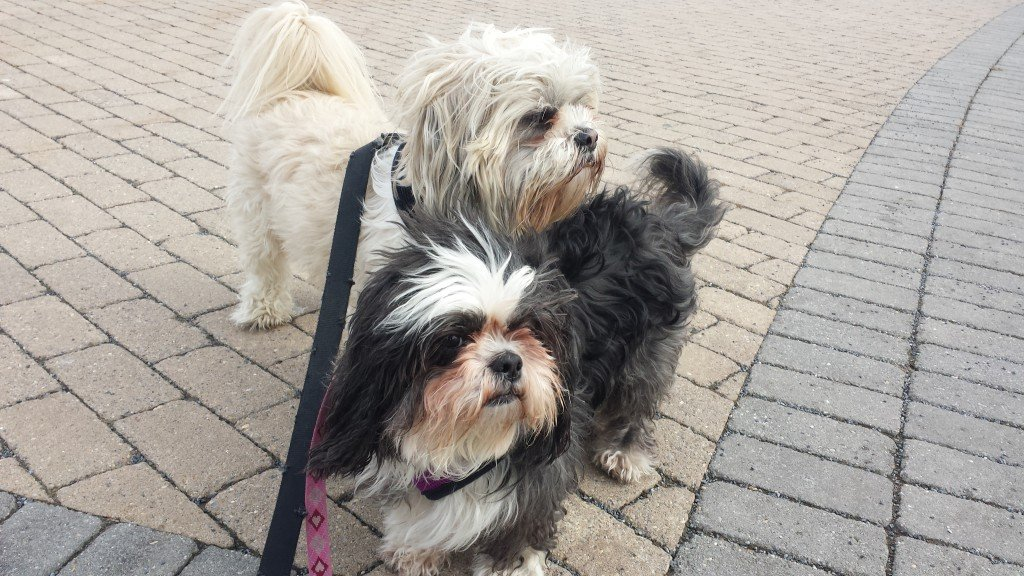 Dog Walking Service Hoboken