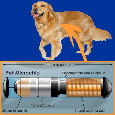 Should you Microchip your Pet?