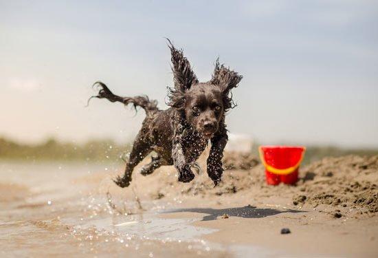 beachdog_88896373.jpg