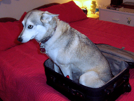 husky-vacation.png