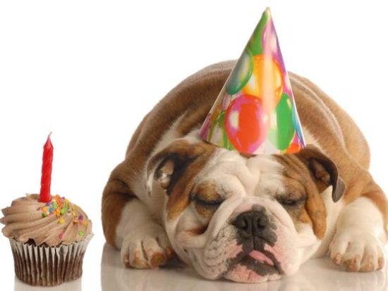 Chicken Birthday Cake For Dogs ~ Tips for dog owners archives page of trusty tails pet care