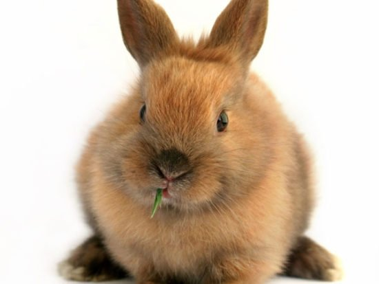 bunny-eating.jpg