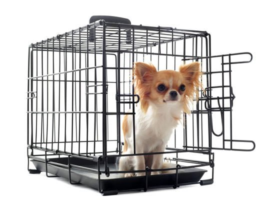 The Best Crates for Puppies