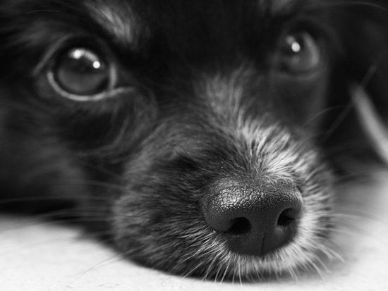 dog-187817_640-1.jpg
