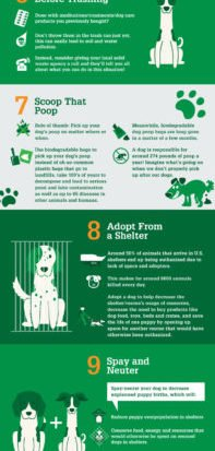 Go-Green-With-Your-Dog-Infographic-Ultimatehomelife.com_.jpg