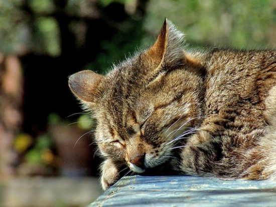 cat-590684_640.jpg