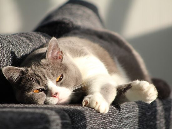 cat-916043_640.jpg