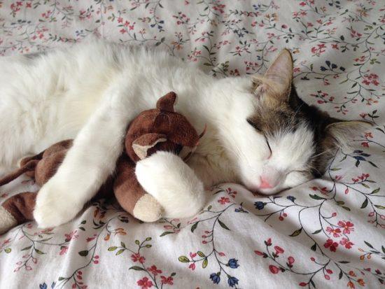 cat-289591_640.jpg