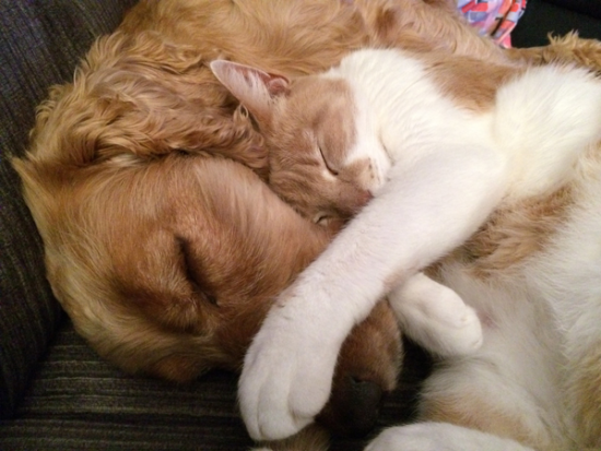 cat-and-dog-775116_1920.png
