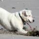8th-avenue-dog-beach-asbury-park-nj.png