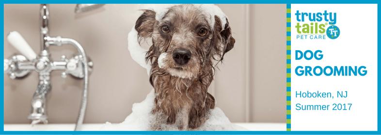 Hoboken-dog-groomer-2.png