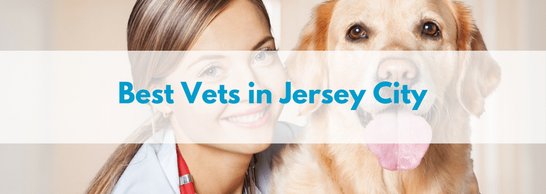 Best-Vets-in-Jersey-City-1.png
