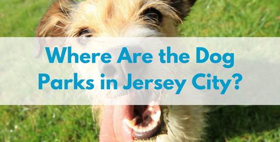Where-are-the-dog-parks-in-Jersey-city.png