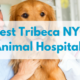 Best-Tribeca-NYC-Animal-Hospitals-1.png