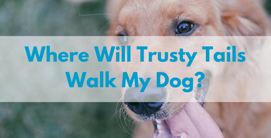 Where-will-Trusty-Tails-walk-my-dog.png