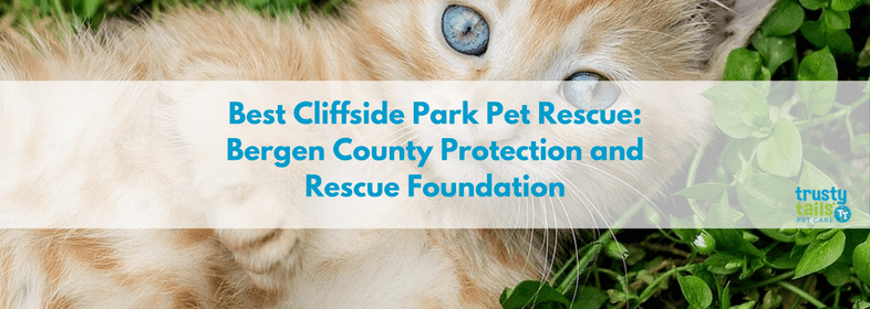 Best-Cliffside-Park-Pet-Rescue-Bergen-County-Protection-and-Rescue-Foundation.png