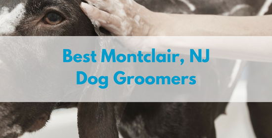 Best-montclair-nj-dog-groomers-1.png