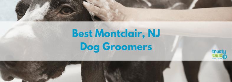 Best-montclair-nj-dog-groomers-1.png