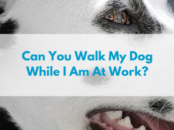 Can-You-Walk-My-Dog-While-I-Am-At-Work.png