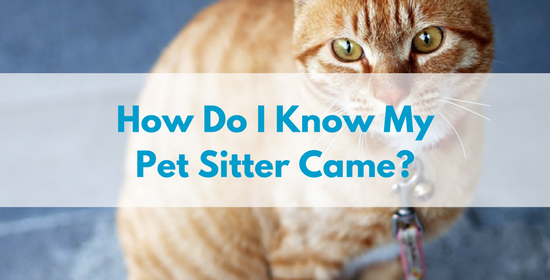 How Do I Know My Pet Sitter Came?