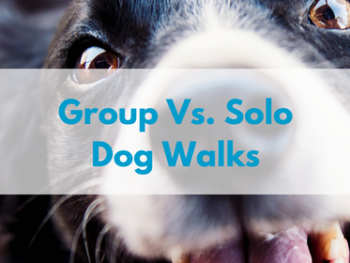 group-dog-walk-vs-solo-dog-walk-1.png