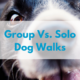 group-dog-walk-vs-solo-dog-walk-1.png