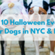 top-10-halloween-events-for-dogs-in-nyc-nj.png