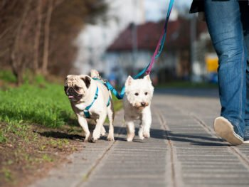 2 dogs walking on leash