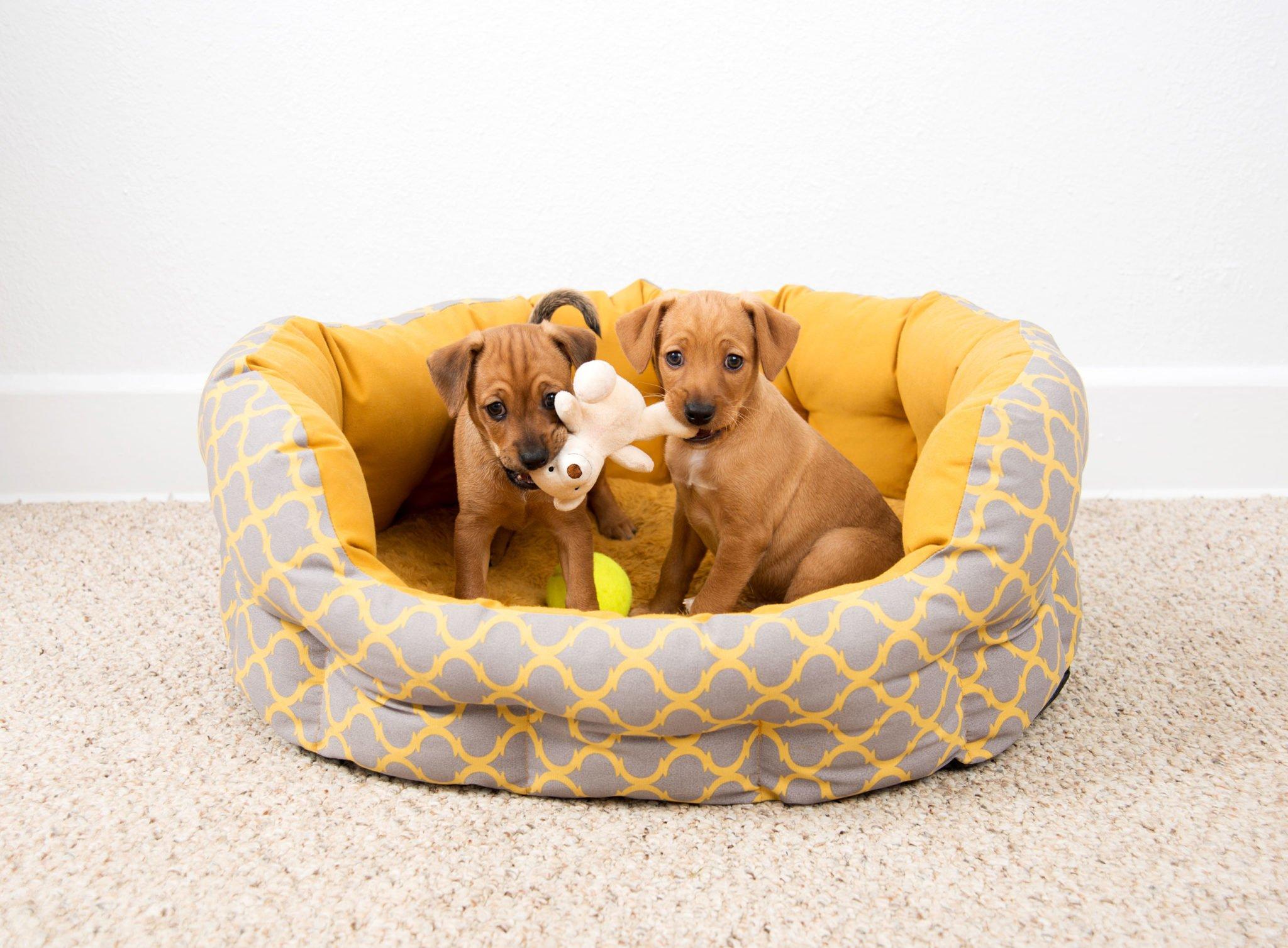 puppy-sitting