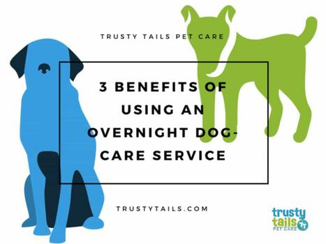 3 Benefits Of Using An Overnight Dog-Care Service