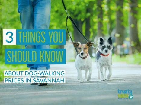 3 Things You Should Know About Dog-Walking Prices In Savannah