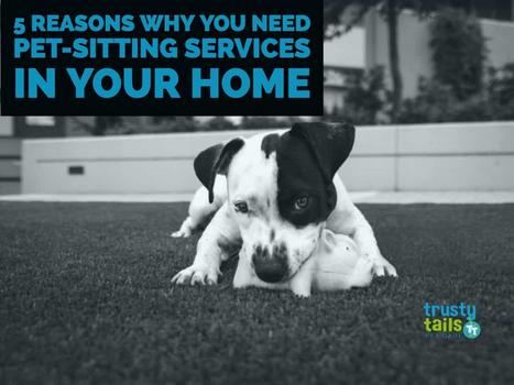 Five Reasons Why You Need Pet-Sitting Services In Your Home