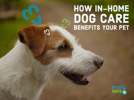 How In-Home Dog Care Benefits Your Pet