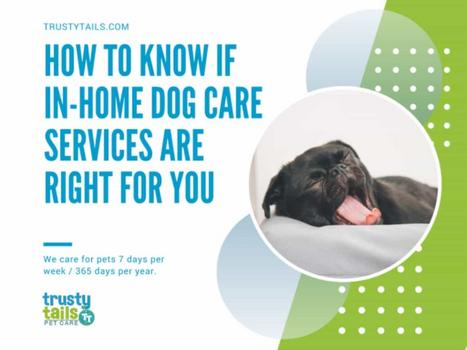 How To Know If In-Home Dog Care Services Are Right For You copy
