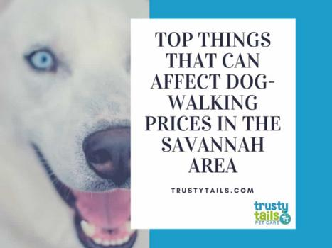 Top Things That Can Affect Dog-Walking Prices In The Savannah Area copy
