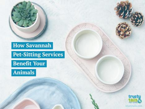 How Savannah Pet-Sitting Services Benefit Your Animals