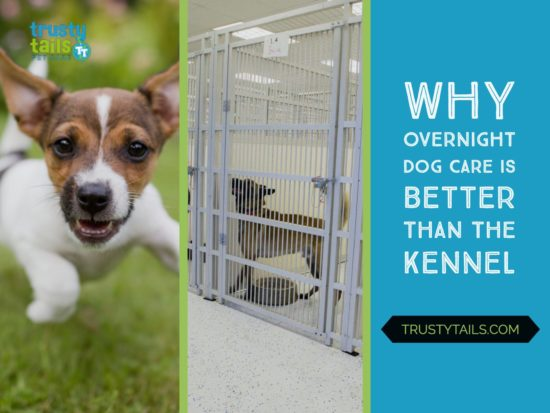 Why Overnight Dog Care Is Better Than the Kennel