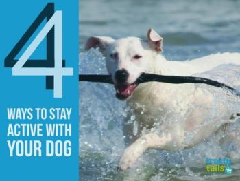 4 Ways to Stay Active with Your Dog