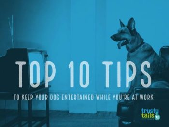 Top 10 Tips to Keep Your Dog Entertained While You're at Work