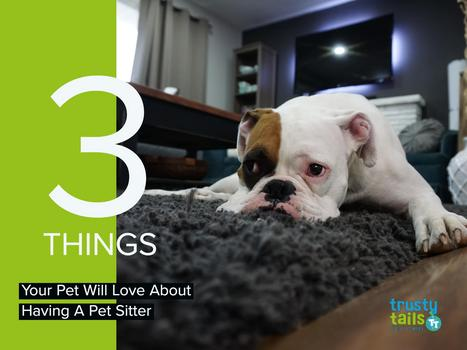 3 Things Your Pet Will Love About Having A Pet Sitter