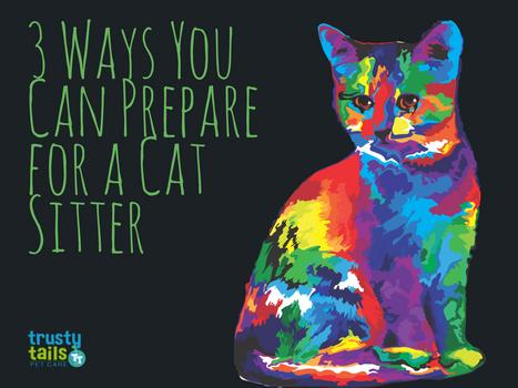 3 Ways You Can Prepare for a Cat Sitter