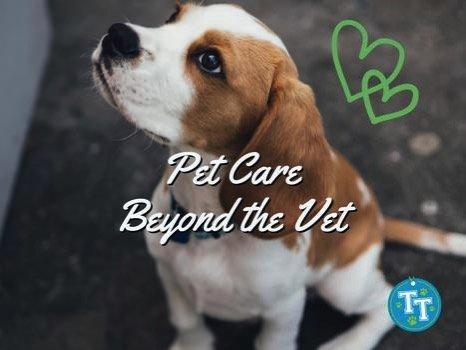 Pet Care Beyond the Vet