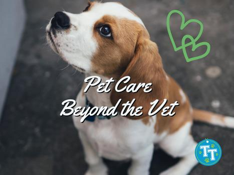 Pet Care Beyond the Vet