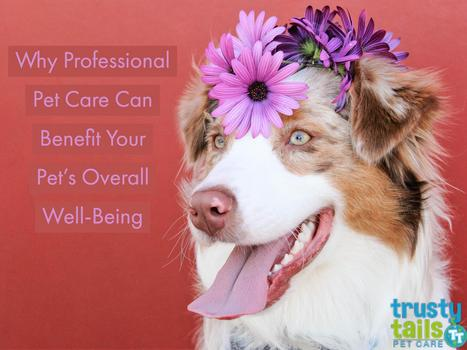 Why Professional Pet Care Can Benefit Your Pet's Overall Well-Being