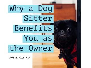 Why a Dog Sitter Benefits You as the Owner