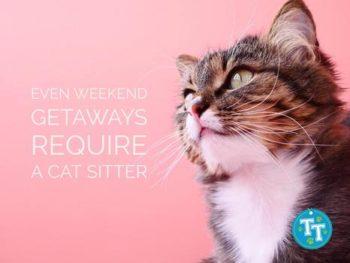 Even Weekend Getaways Require a Cat Sitter